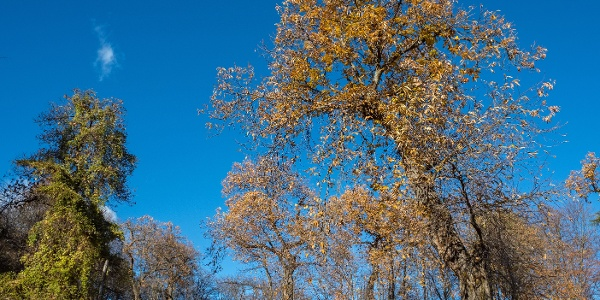 Chestnut grove near San Martino in Campi