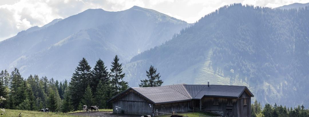 Schneewaldalpe, Dornbirn-Ebnit
