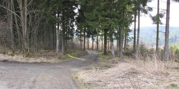 Hier kommt die Sauerland-Waldroute hoch.