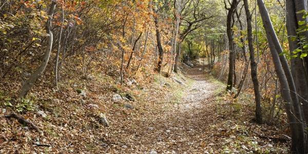 Herbstfarben auf dem ersten Teil des Weges am Monte Taglio di Sarca