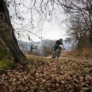 Forststraße zwischen Kastanienbäumen im März