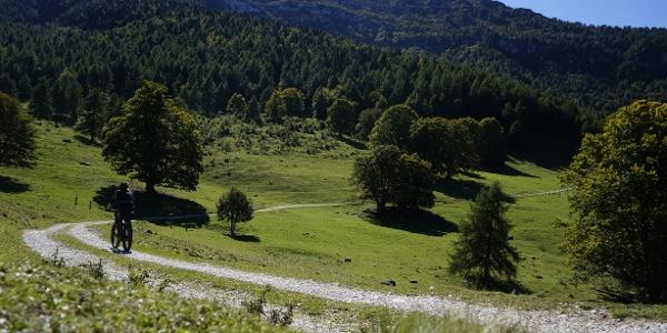 Der erste Abschnitt auf Forstweg zwischen den Wiesen der Malga Campo im Herbst