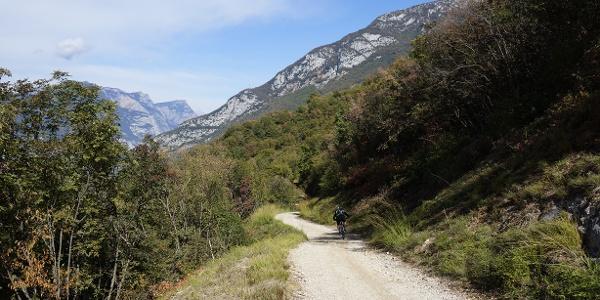 Die Forststraße in Richtung Bolognano