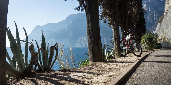Lungo la ciclabile fra Riva del Garda e Torbole