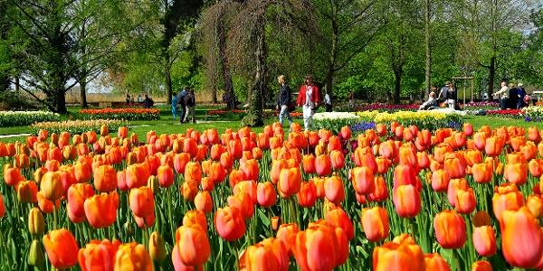 Tulpenfest im Parc de l'Indépendance.