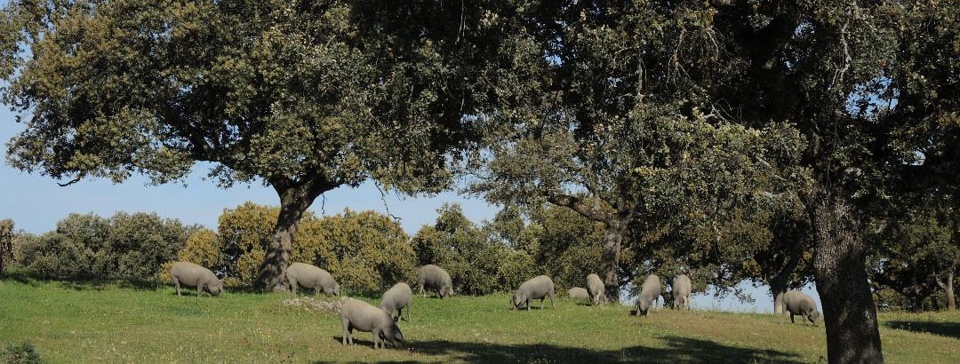 kurz hinter Moneterio vor den baumlosen Llanos de Santiago