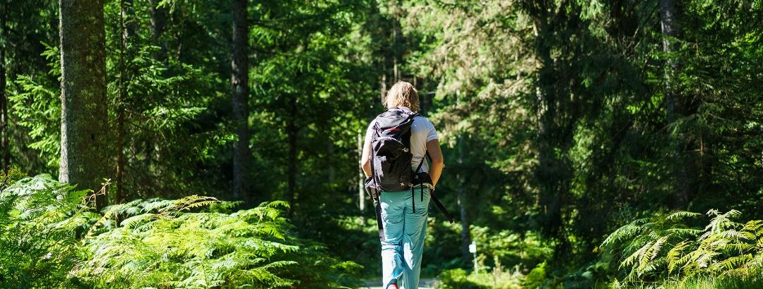 Wandern von Camp zu Camp im idyllischen Schwarzwald