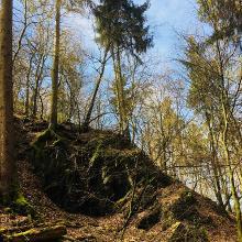 Im Andeler Wald