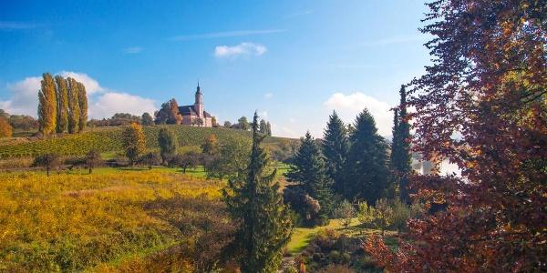 Wallfahrtskirche Birnau in den Weinbergen