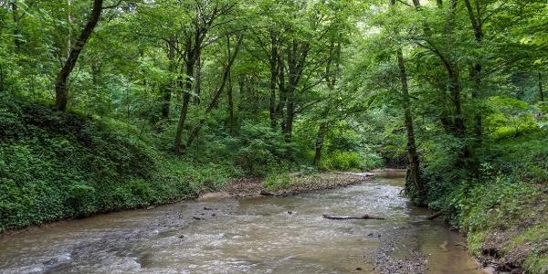 Széles hegyi patakként vágtat a Gaja (Gaja-szurdok)