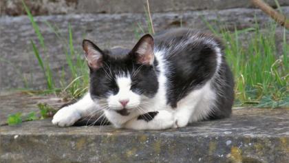 Die Katze auf der Mauer und auf der Lauer