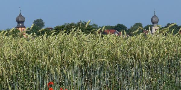 Getreidefeld bei Neuses am Berg