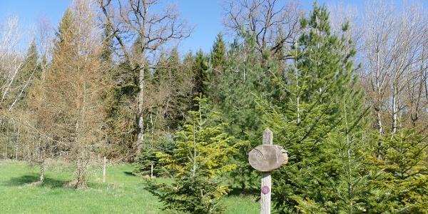 Pflanzungen im Arboretum Bondorf