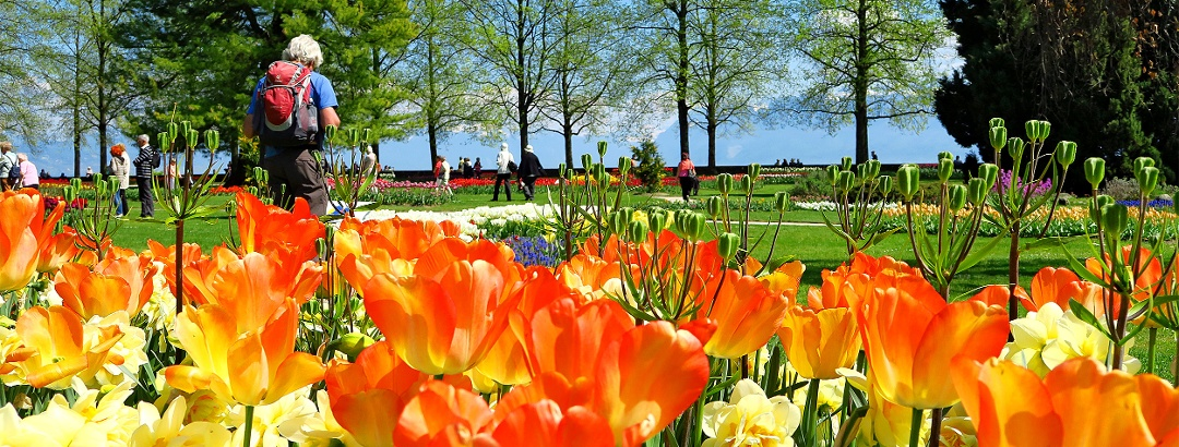 Tulpenfestival in Morges