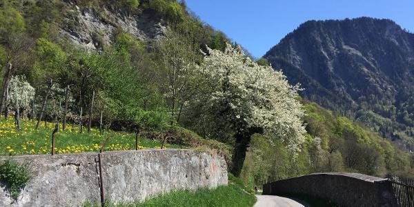 Frühlingspracht in Malans