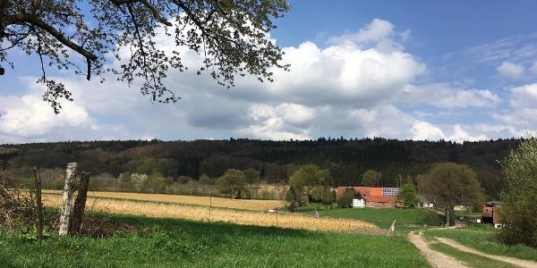 Blick zum Teutoburger Wald
