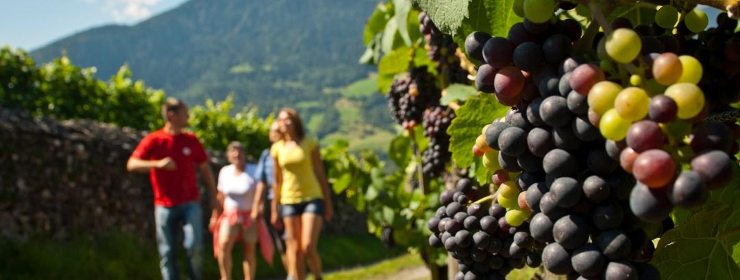 Weinwanderweg Chur-Fläsch