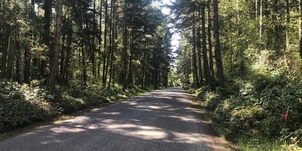 Forrest road on Lopez Island