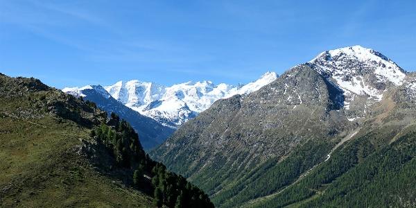 Blick von der Alp Languard auf das Berninamassiv.