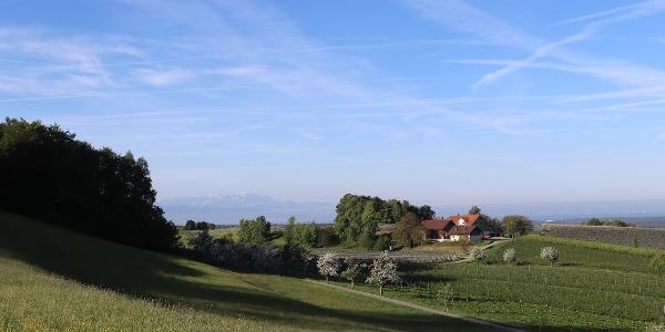 Aussichtspunkt zwischen Dieglishofen und Brünnensweiler