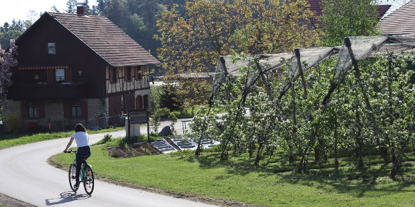 Weg durch Hergottsweiler
