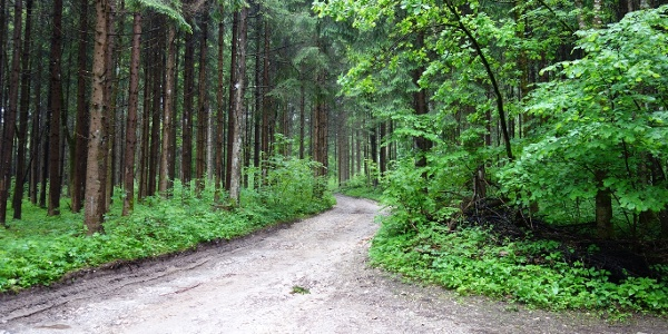 Kurz nach dem Start, Forstweg