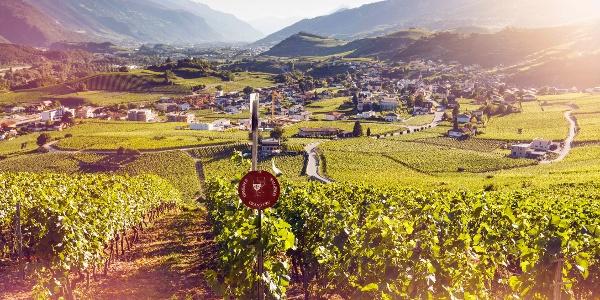 Vineyards above Salgesch
