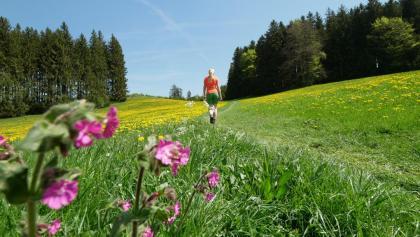 Anstieg zum Auerberg inmitten der Frühlingsblüte