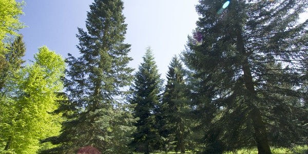 Bäume im Arboretum Haslach