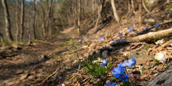 Frühling auf dem Hexenstieg
