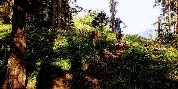 Vorberg Trail - flowige Waldpassage