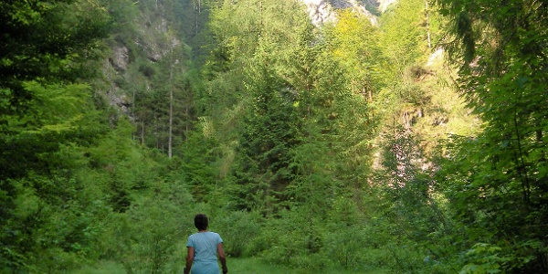 Forststraßenende am Schluchteingang