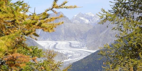 Herbst mit Gletscher