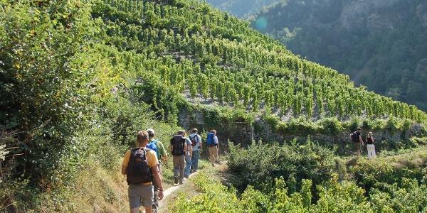 Randonnée exceptionnelle à travers le plus haut vignoble d'Europe