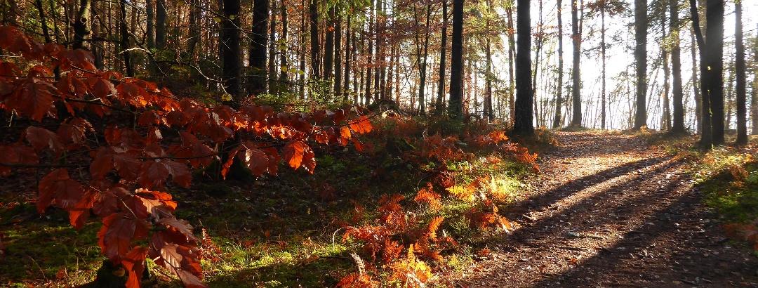 Herbstlicher Wanderweg zum oberen Spintikteich