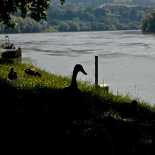 Donau bei Ottensheim