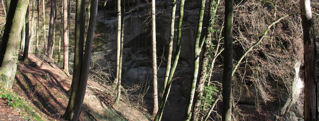 Wald im Hödinger Tobel
