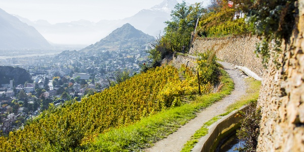 Vineyard in Sion