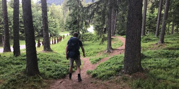 Schattige Waldwege im Piller Moor