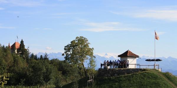Weinbau Kaiserspan ob Hitzkirch