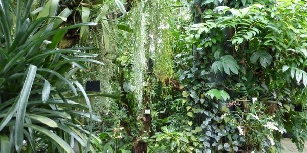 Botanischer Garten der Universität Tübingen