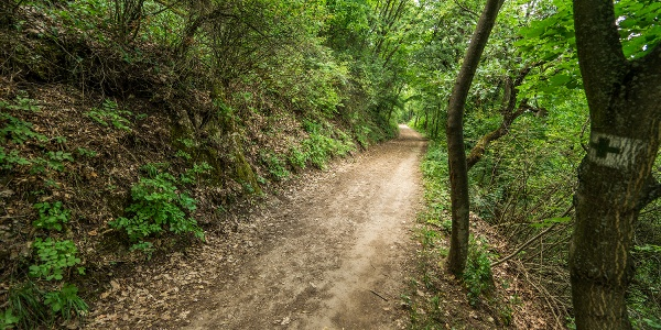 A Guckler-út a hegyoldalt követi