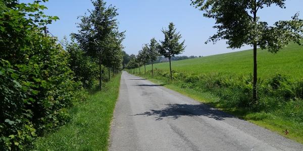 Eine kleine Allee begleitet den Wegeverlauf bei der Siedlung Isenburg