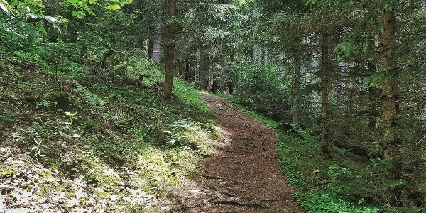 Beautiful trail through the forest at Hochwurzen