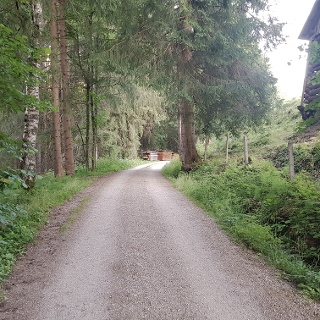 Through the forest to Finsterlhof farm