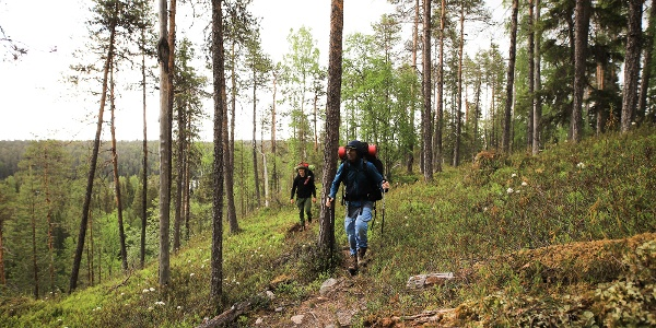 Hikers along Karhunkierros in Oulanka National Park