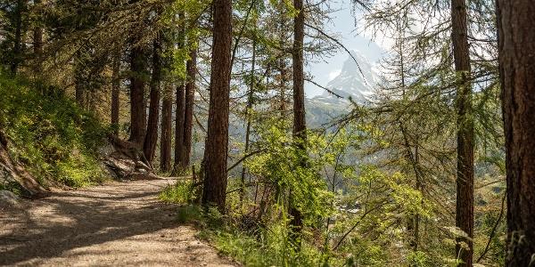 Gemächlicher Spaziergang oberhalb des Dorfes
