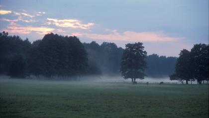 Lüneburger Heide Abendstimmung