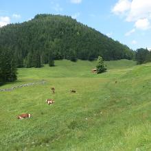 Landschaft bei der Bayr-Alm