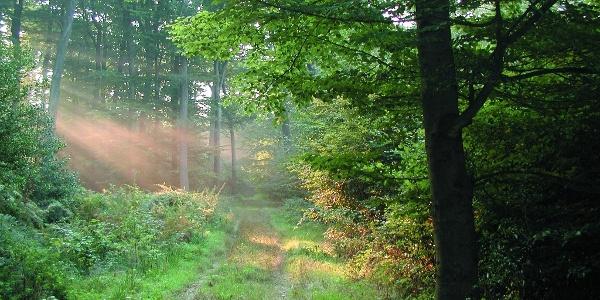 Magisches Waldlicht